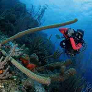 Discover Scuba Course in Curacao | Ocean Encounters