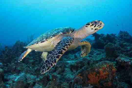 Unlimited Shore Diving in Curacao | Ocean Encounters