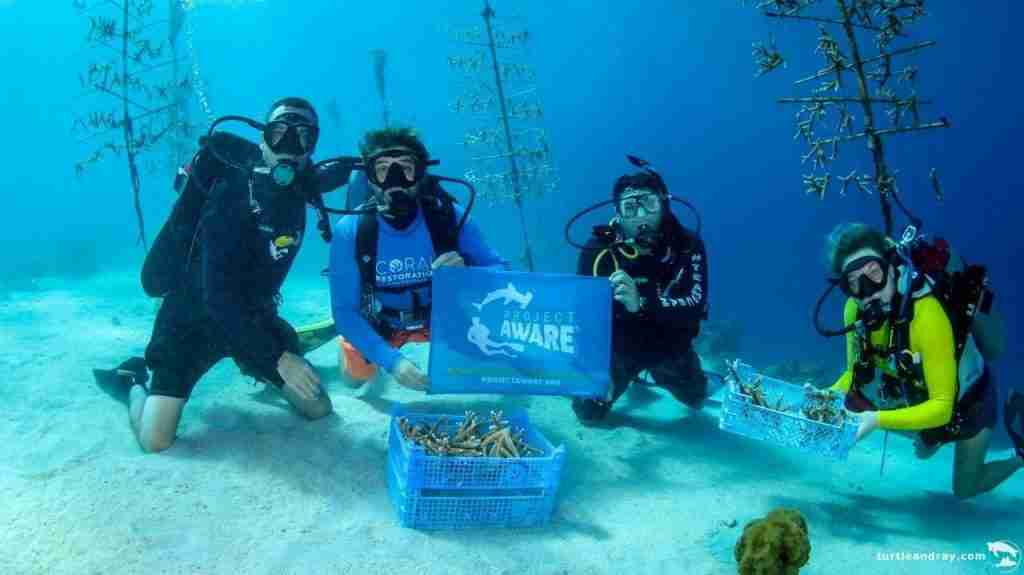 Coral Restoration in Curacao | Ocean Encounters