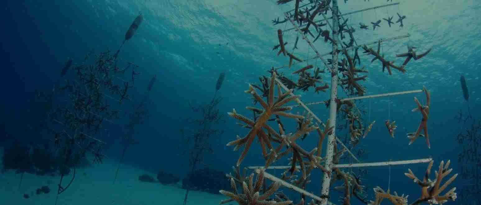 Coral-Restoration-1547x660