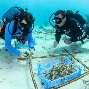 Coral Restoration Specialty Course