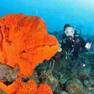 Boat Diving Packages in Curacao