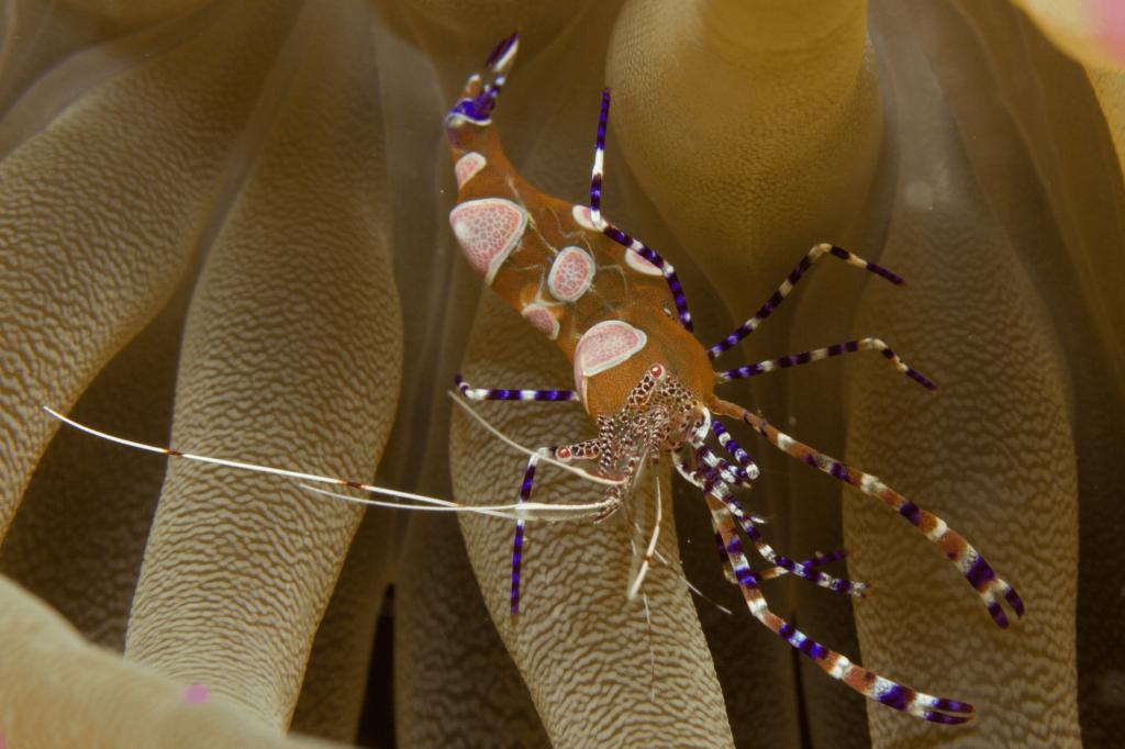 Curacao is a Macro Photography Paradise | Ocean Encounters