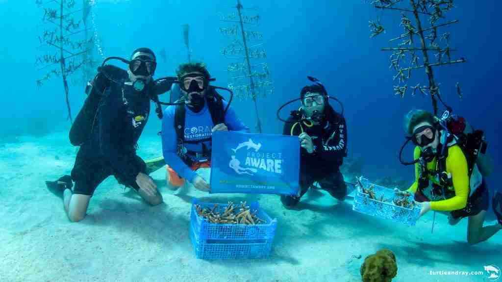 PADI Coral Restoration Specialty Course in Curacao   Ocean Encounters